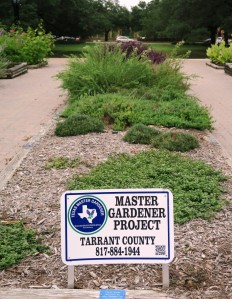 ft worth botanical gardens.july15 (41)