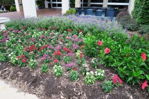 ft worth botanical gardens.july15 (8)