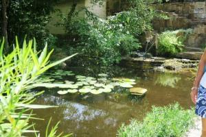 lady bird johnson garden.1505
