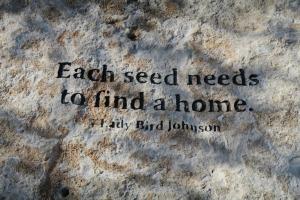 lady bird johnson garden.1538