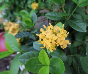 mystery plant b.july27.14