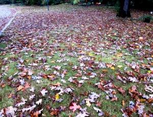 leaves falling1
