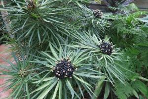 mystery plant c aug10.152