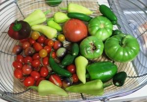 veg harvest aug2.15.2