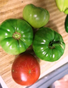 veg harvest aug2.15.5