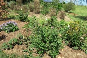 gardens eureka springs.15 (67)