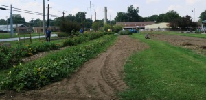 jefferson county teaching garden.sept.15.3