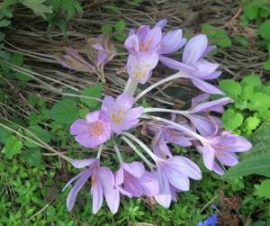 mysery plant b sept28