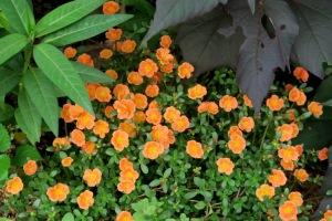 mystery plant a.sept7.15
