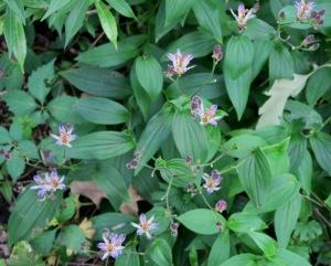 mystery plant b sept7.15