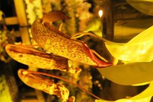 orchid cave birds botanicals kc (25)