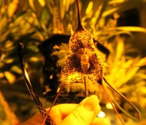 orchid cave birds botanicals kc (37)