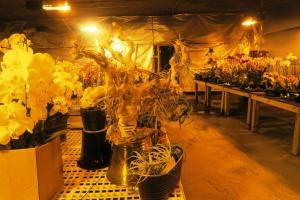 orchid cave birds botanicals kc (9)