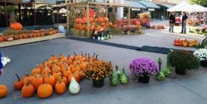 pumpkins and gourds. sept15.