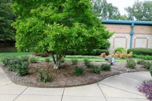 state office landscaping aug.15 (11)