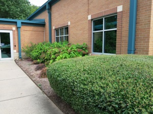 state office landscaping aug.15 (12)