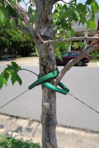 tree damage jeff co.15.1
