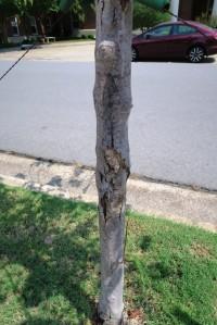 tree damage jeff co.15.2