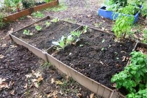 veg garden sept19.15.1