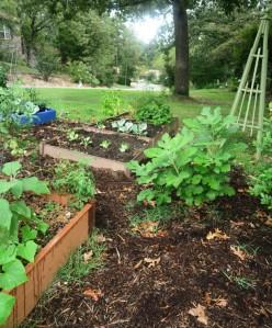 veg garden sept19.15.3