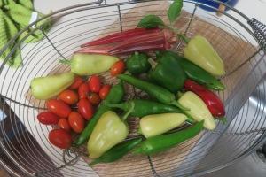 veg harvest sept26.15.1