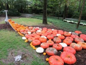 pumpkins garvan.oct15 (2)