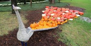 pumpkins garvan.oct15 (4)