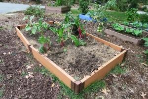 veg garden oct4 (2)
