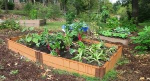 veg garden oct4 (4)