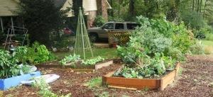 veg garden oct4 (5)