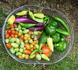veg harvest oct5 (1)