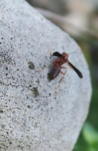 wasp.oct1.15.