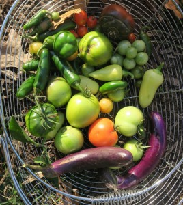 veg harvest final warm season.nov13.15 (2)