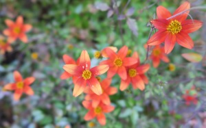bidens orange dec18 (1)