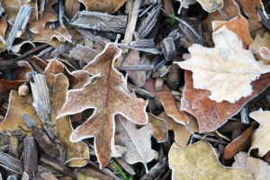 frost dec4.155