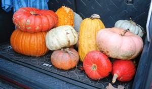pumpkins sent.