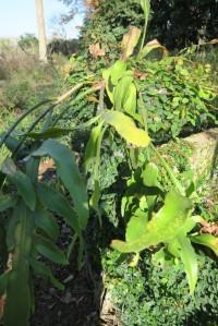succulents.eud.dec151
