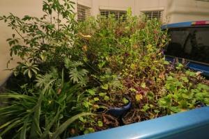 overwintering plants carroll cot (1)
