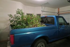 overwintering plants carroll cot (2)