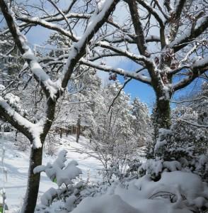 snow jan.163