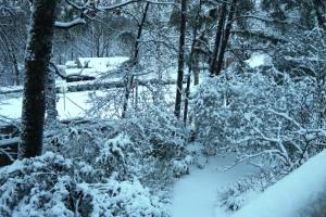 snow jan22 (12)