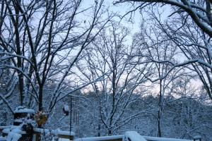 snow jan22 (13)
