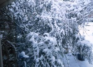 snow jan22 (7)