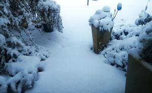 snow jan22 (8)