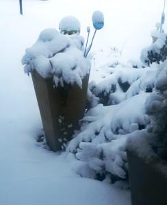 snow jan22 (9)