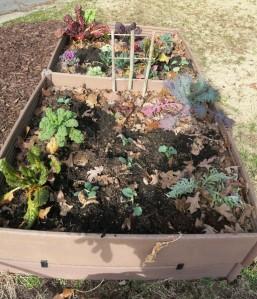 veg garden feb29 (1)