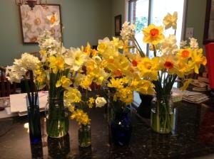 daffodils shearers.mar16