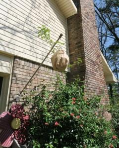 hornet nest fake.mar16 (2)