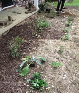 kyle planting.mar (1)