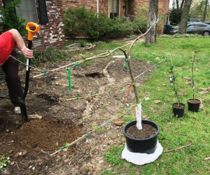 kyle planting.mar (2)